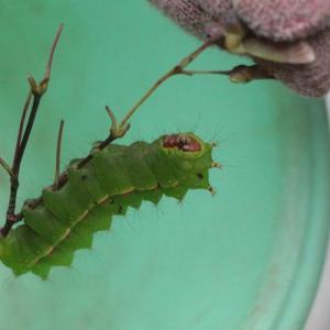 これ、なんの虫? (写真有、注意)