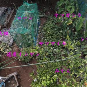 【菜園DIY】電気柵への道③ 三度目の襲撃