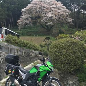 山桜part2