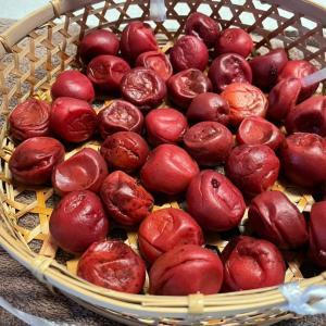 土用干しと紅生姜作り