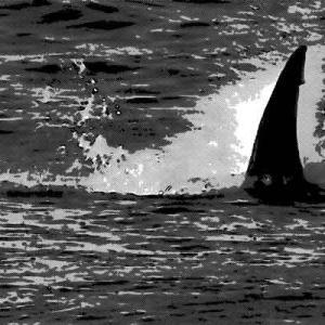 遠泳実習を行う海岸に巨大なサメが