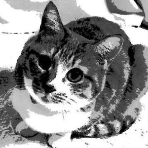 うちの猫ではない別の猫が布団に入ってきた