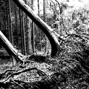 台風の被害に遭った山林に出かけた夫が・・・