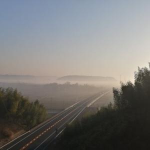 朝の梅林😀