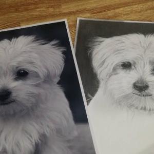鉛筆画『子犬』その1