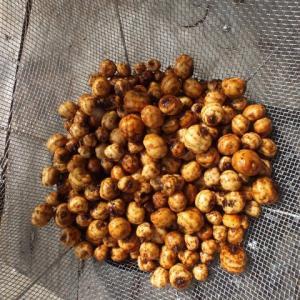 タイガ-ナッツ収穫