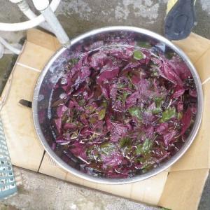 紫蘇ジュースを作りました。