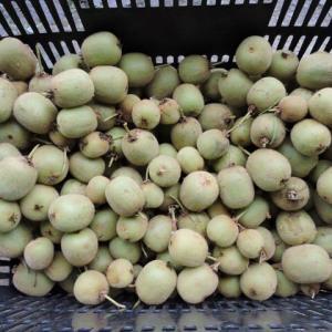 摘果キウイでジャムを作った。