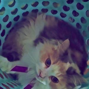煮魚嫌いと猫を探せ!