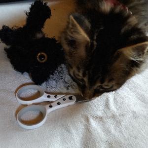 最強猫爪切りと山盛り唐揚げ