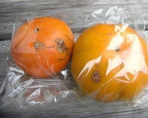 かざぐるまの 柿 ~秋ですね