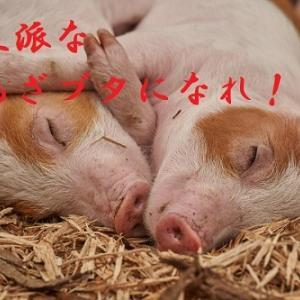 【賢い、A布の落とし方】 黒豚くんのある一日