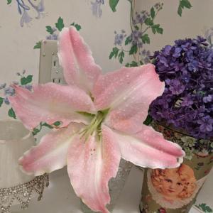 ピンクカサブランカ♡4連休は家事時間を計測 見直す良い機会に!