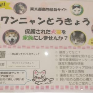 ワンニャン東京 保護されたわんちゃん猫ちゃんが幸せな時間を過ごせます様に~