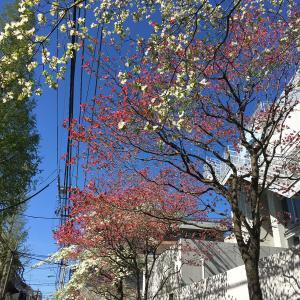 良い天気♪