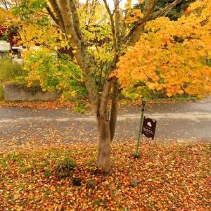 裏磐梯の紅葉も本番を迎えました!お庭もいい感じ!!