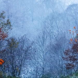 みちのく初雪の里山2