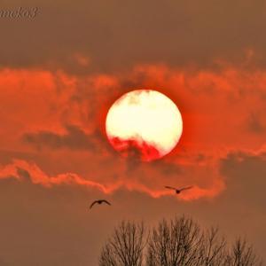 みちのく夕陽に白鳥たち6