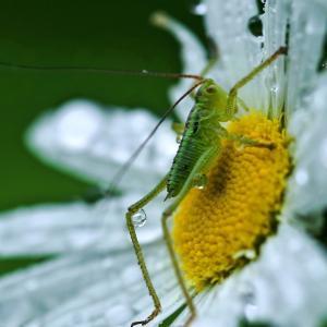 みちのく花と虫たち