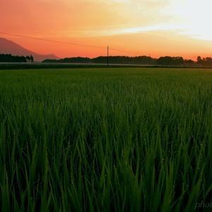 みちのく夏の田園風景