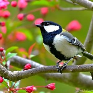 みちのく小鳥たち11