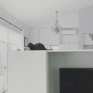 ★雑談・リモートワーク中のウチの犬猫