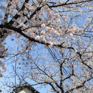 【たんぽぽ新かんべ】デイサービスお花見ドライブ行っていきました(≧◇≦)