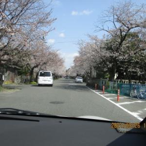 【たんぽぽ新かんべ】お花見ドライブ!!