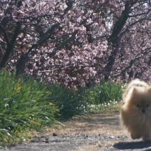 春を満喫すルネ