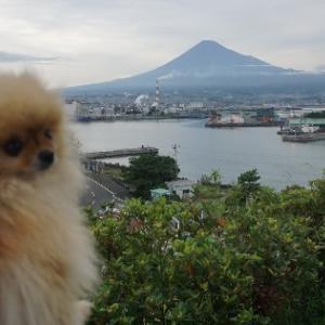 富士山見えルネ