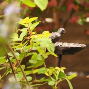 鳥バカ日誌