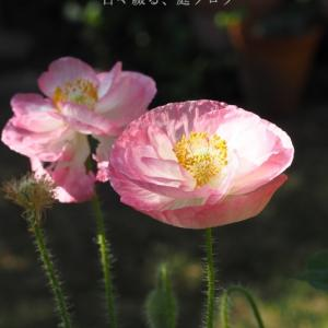 5月中旬の庭