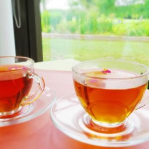断食施設、心音ではドクダミ茶のサービスを