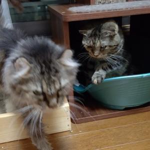 シニア猫は愛おしい。