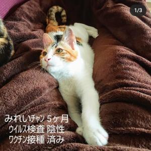 子猫3匹の紹介。