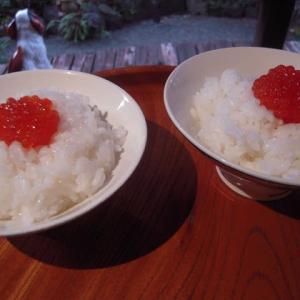 おせち料理の忘れ物 (パート2)