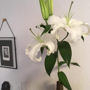 今週の花はユリです