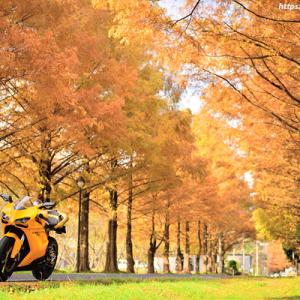 bike@autumn_2020