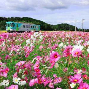 hojo-railways_15 (with cosmos)