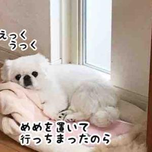 寝坊しました(箱根にて)