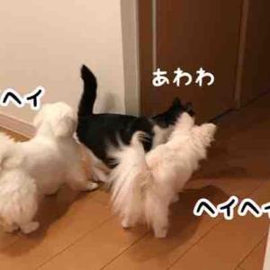 悪い猫を狩なのら~