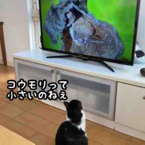 テレビっ子ブス子