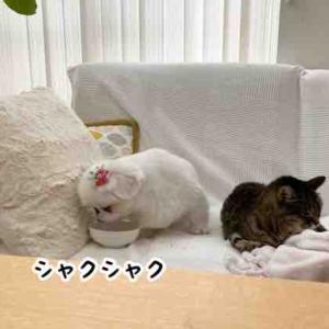ウチの猫たち