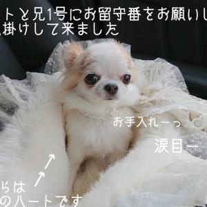 ワンちゃんOKテラス席☆コレド室町テラス状況