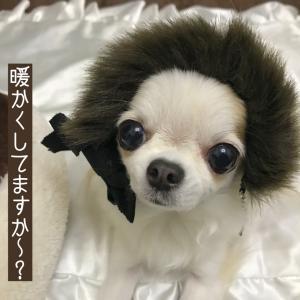 犬用マフラーと温活