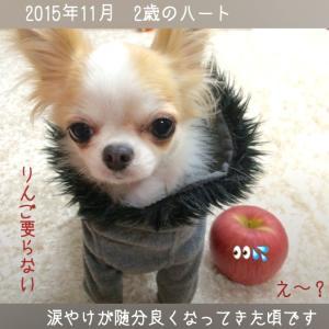 ウチの愛犬☆意外に食べない物