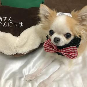 飼い主と愛犬の体調管理と体重管理