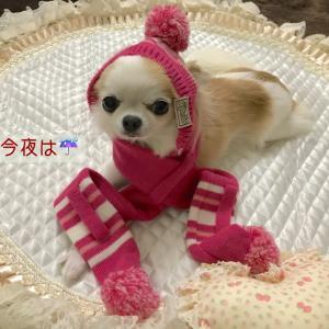 頭暖身寒犬