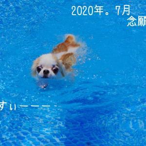 ドッグランでプール♪の日
