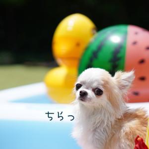 小型犬の全身運動
